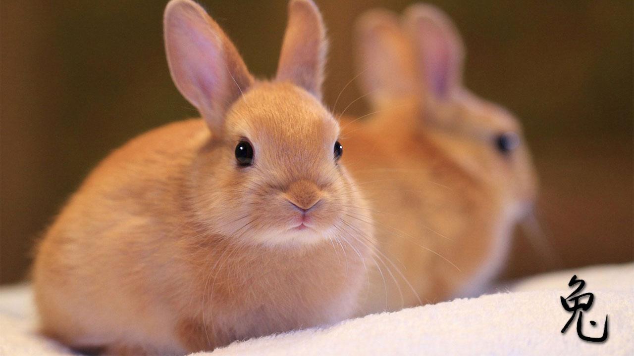 месяц кролика