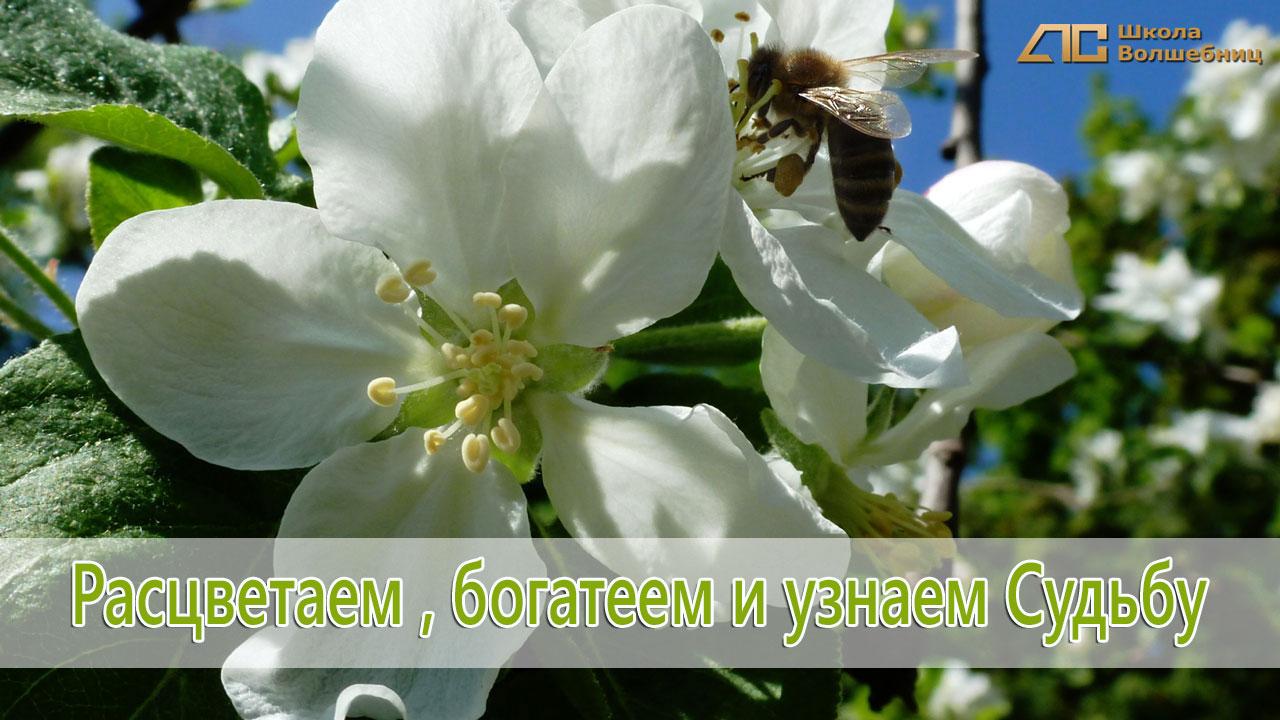 Май-чародей: растения мая